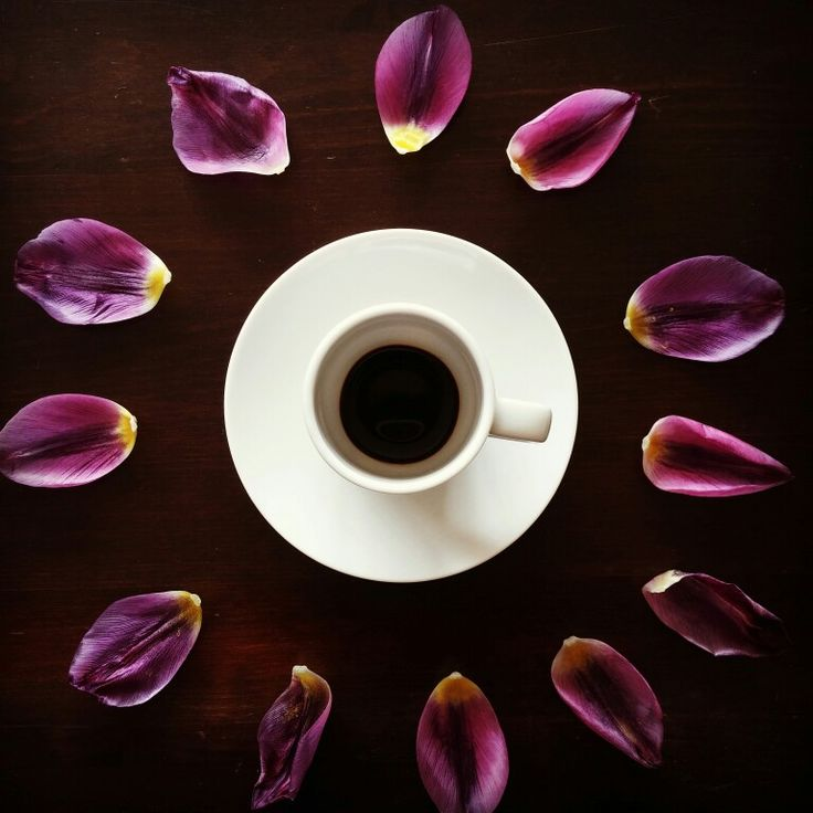 Coffee and petals #coffee #moka #espresso #artood