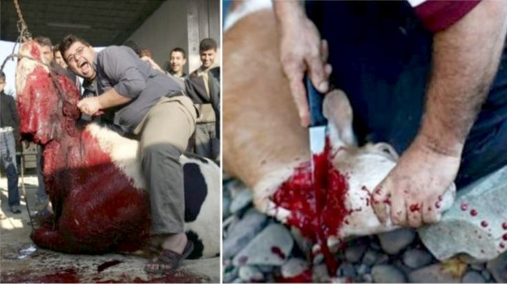 The pictures above show just a small part of the tradition of halal,  widely spread in the Islamic world. Animals – anythin...