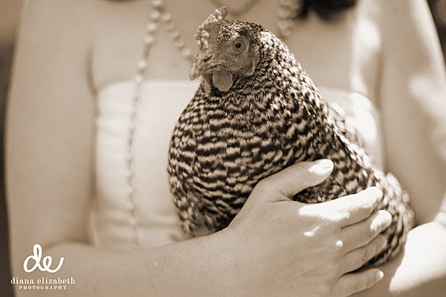 and chickens...: Boho Farms, Pearls, Things Chicken, Chickad China, Chicken Stuff, Just Love, Farms Life, Hens, Animal