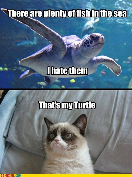 grumpy cat and a grumpy turtle!!!