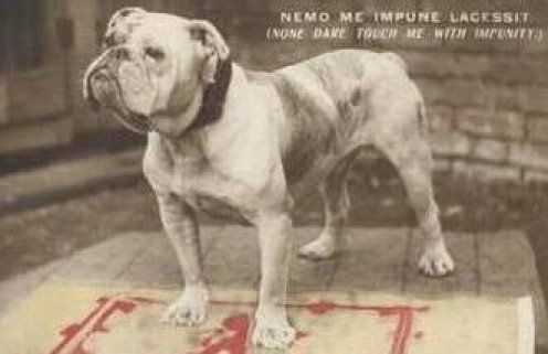What you should know about English, Victorian, and Olde Tyme Bulldogs.   PetHelpful