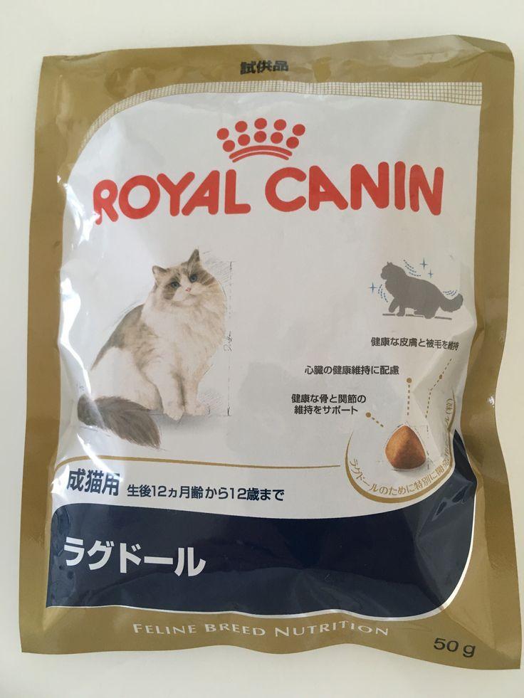 里親さんブログラグドール - http://iyaiya.jp/cat/archives/80869