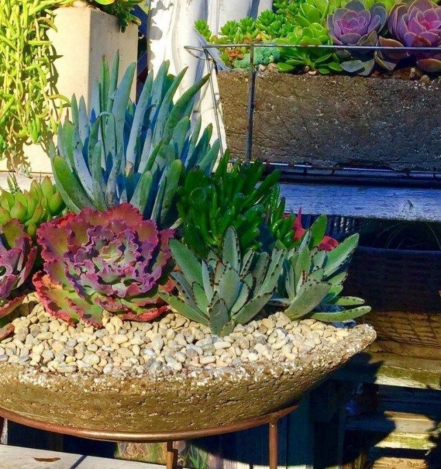 41 Lovely Indoor And Outdoor Succulent Plants Ideas Plants