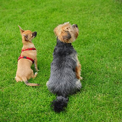 Dog behaviourist Southport - http://www.dog-ramblers.co.uk/dog-obedience-training-southport/  #DogBehaviouristSouthport