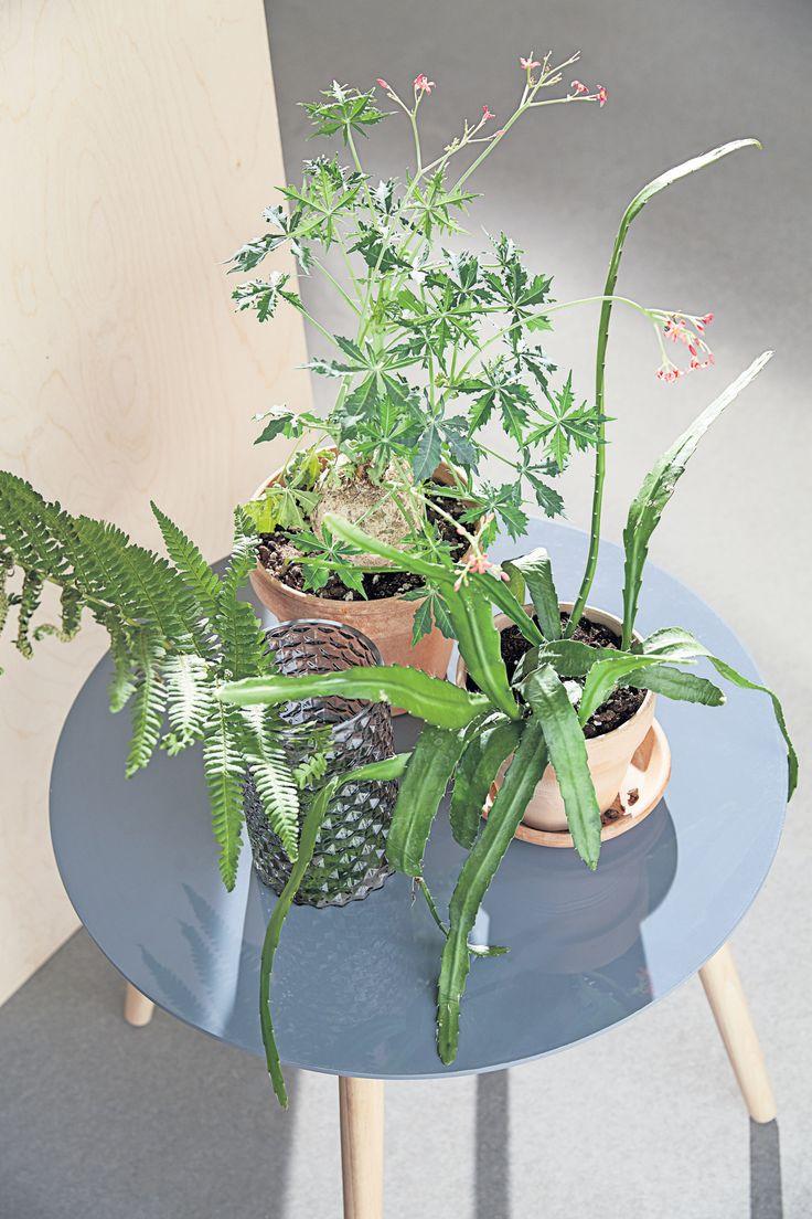 FANNERUP sofabord, botanikk, blomsterpotter, detaljer | Casual Contrast | Skandinaviske hjem, nordisk design, Skandinavisk design, nordiske hjem, interiørdesign, innredning, stue, multifunksjonelle rom | JYSK
