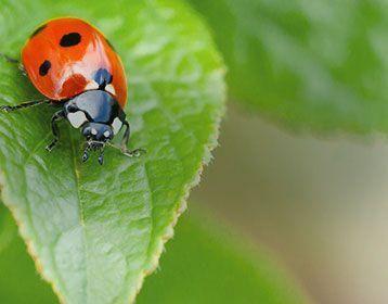 Jardinage Ecologique Composteurs Abris A Insectes Truffaut Potager Graines Plants Carre Potager Serres T En 2020 Composteur Jardinage Jardinerie Truffaut