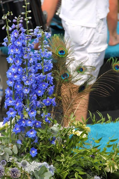 While many view the boats from the shore the colorful eyes of the peacock feathers watch the spectators from the boat. #whoislookingatwho
