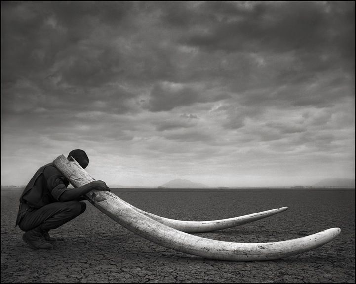 Since 2000, Nick Brandt has documented the extraordinary wildlife of Africa and its unfortunate destruction. His last set of images are portraits of poachers, hauling their inventory of giant ivory tusks and decomposing bodies including flamingos, bats, giraffes and various animals. #Africa #wildlife