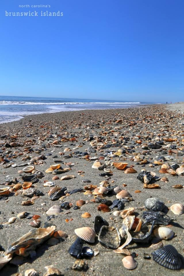 Shells On Holden Beach Nc Holden Beach Best Family Beaches Nc Beaches