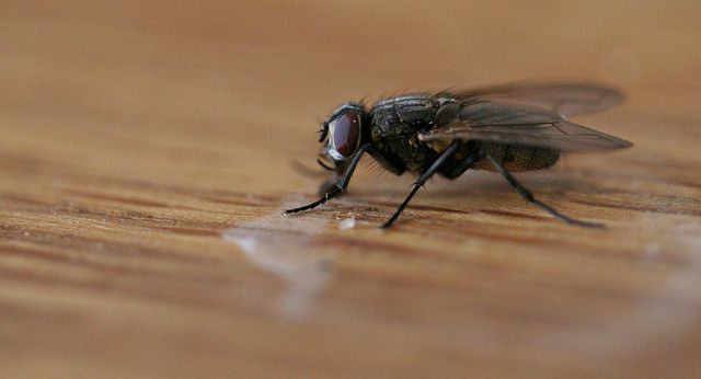 Fly | 1/100 sec, f/2.8, 60 mm, ISO 1600. Slightly enhanced in PhotoScape.