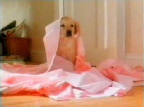 Andrex:  Puppy.