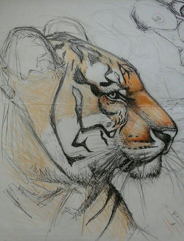 tiger sketch by Chuckfarmer
