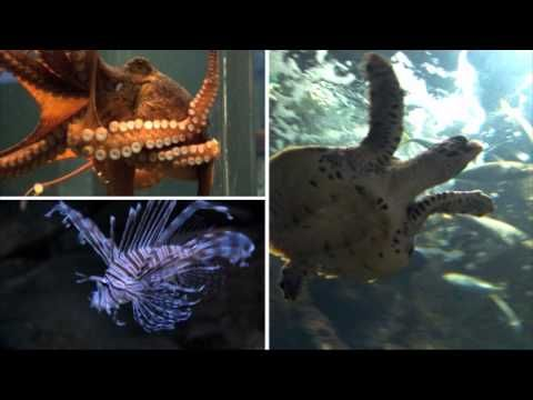 Kelly Tarlton's SEA LIFE Aquarium (Auckland, NZ). Looks a bit like underwater world that we have just down the road, but still might be worth going to