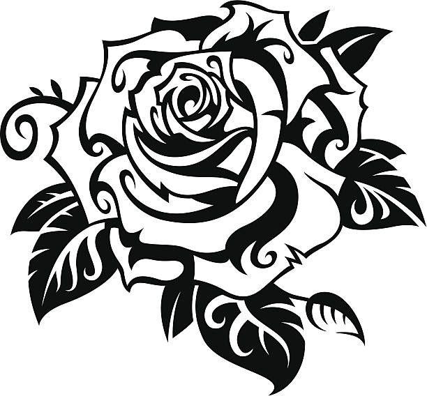 Black Rose On White Background Rose Stencil Drawings Black Rose