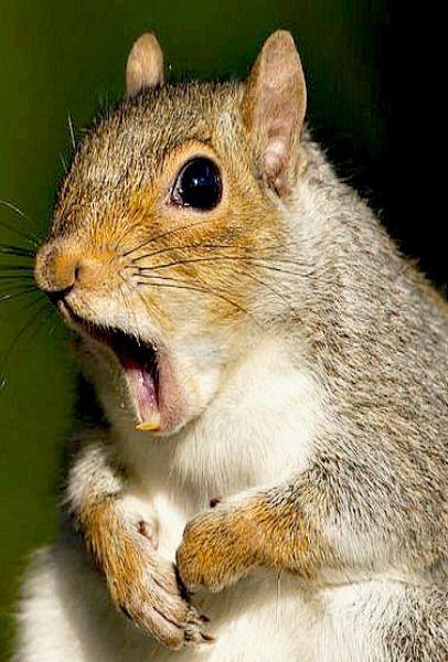 Surprised squirrel!