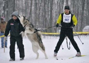The Noquemanon ski race repertoire now includes a 12K skijor event for nordic skiers to participate in with their dogs! Marquette, MI – The Noquemanon Animoosh Skijor 12K event is a fairly new addition which features cross country skiers competing as they are pulled by teams of 1-2 dogs.  This is a great event for […]