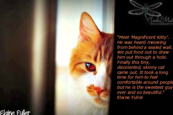 Thanks Elaine Fuller, Tonbo Photography for sharing the story of Magnificent Kitty.