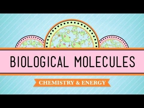 Biological Molecules - You Are What You Eat