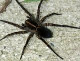Characteristics of Spiders: Spider.