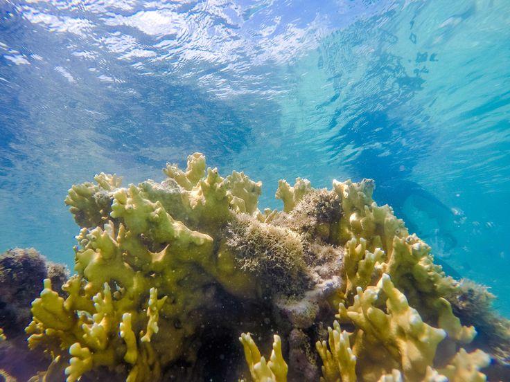 Corais nas Galés de Maragogi #Maragogi #SalinasMaragogi #Reef #Corais #Scuba #ScubaDiving #Mergulho