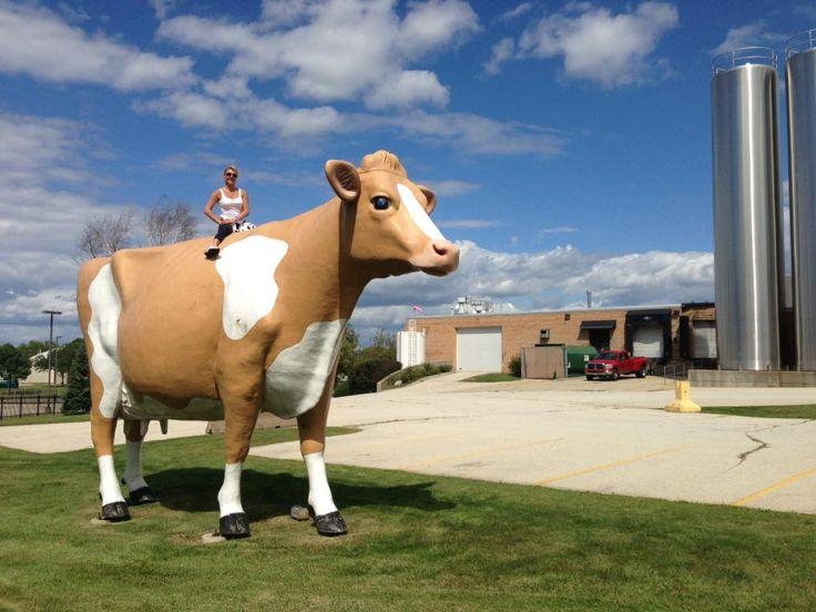 Golden Guernsey cow waukesha