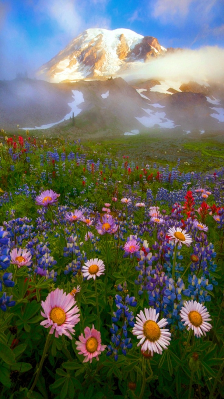 Field of flowers.  Awsome picture.  Go to www.YourTravelVideos.com or just click on photo for home videos and much more on sites like this.
