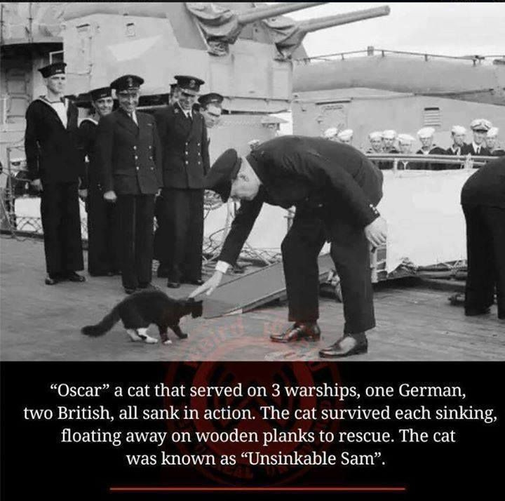 Unsinkable Sam, the cat who survived three sinking military ships.