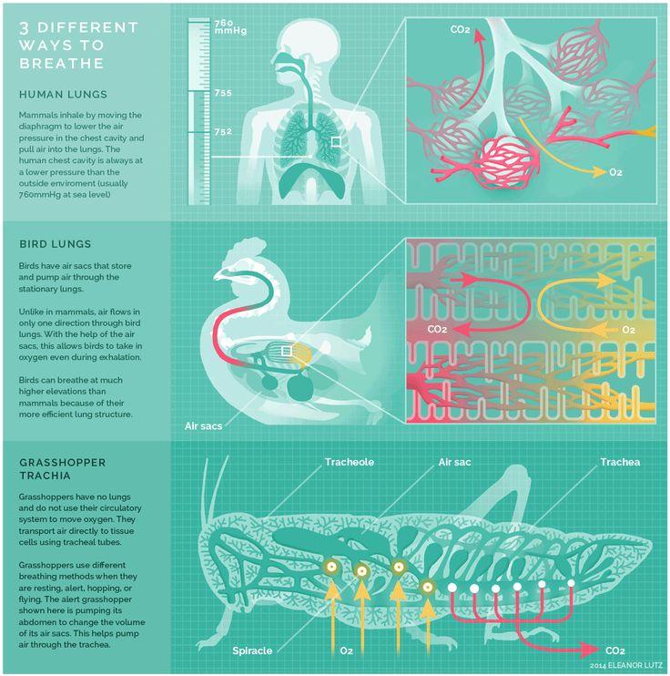 3 différentes manières de respirer comment choses respire
