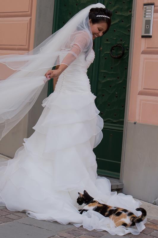 Questo micio non vuol propri lasciar andare la #sposa all'altare... :)