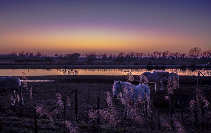 White Horses at Dusk by Lele Bissoli on 500px