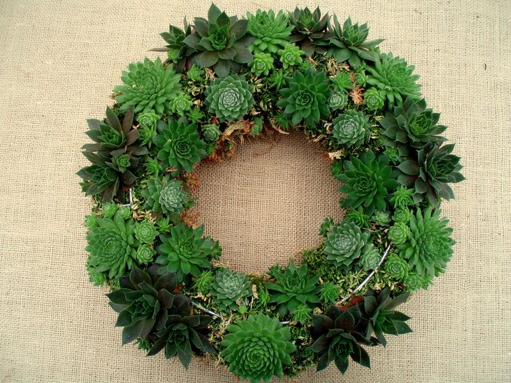 Full Living Wreath- love the different shades of green! So pretty!