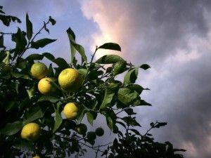 La dieta del limone: perdi peso e depuri il corpo in tre giorni
