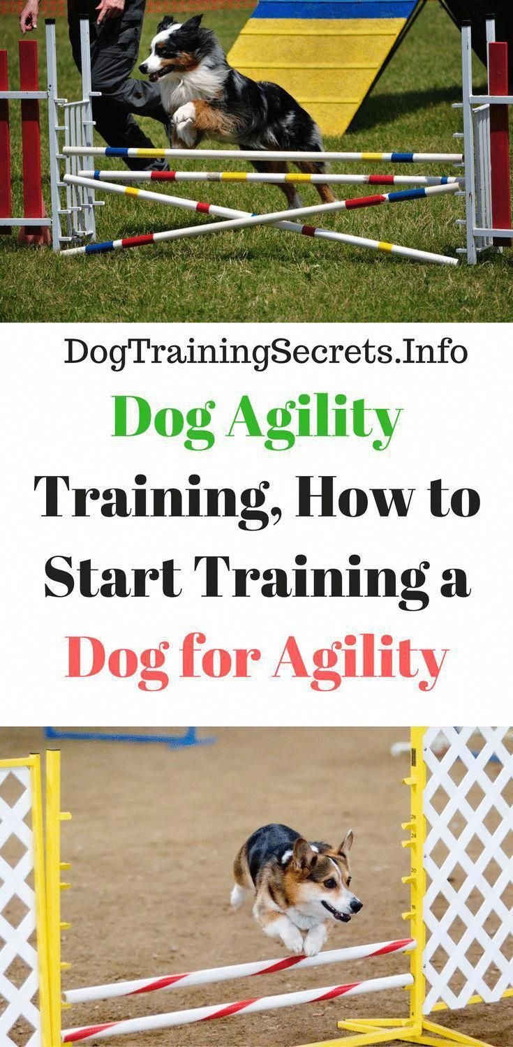 The Latest Guide And Strategies For Command For Dog Training Plan