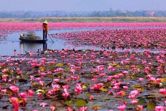 Озеро Лотосов. Тайланд