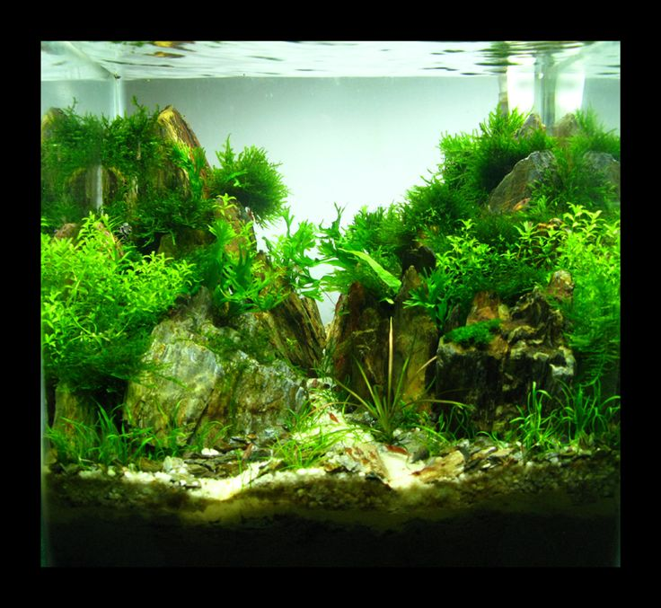 17 Best images about Nano tank aquascape on Pinterest | 7 ...