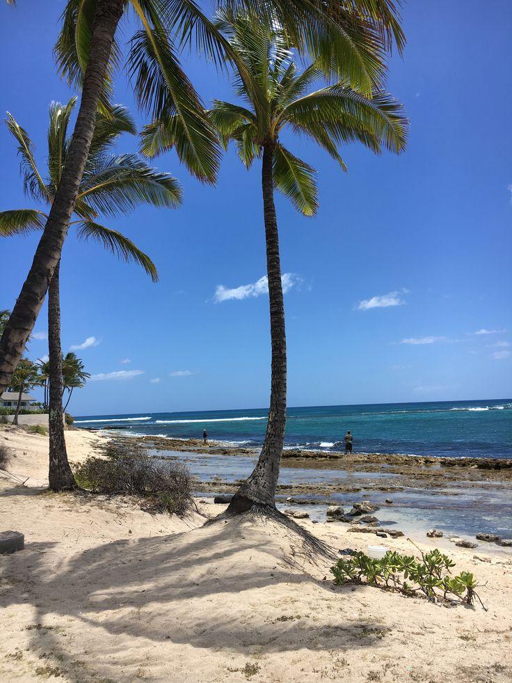 from Scott beach gay hawaii makaha