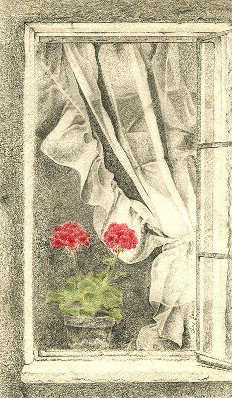 Red Geranium Drawing Print - Window Art - Alisa Wilcher. $28.00, via Etsy.