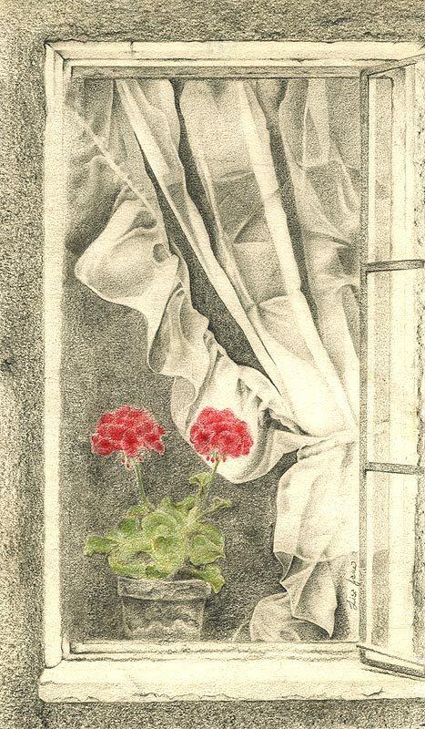 Red Geranium Drawing Print - Window Art - Alisa Wilcher. $28.00, via Etsy.