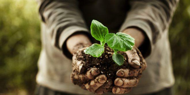 Mercato del biologico europeo: crescita a due cifre. Trasformatori e importatori aumentano più dei produttori