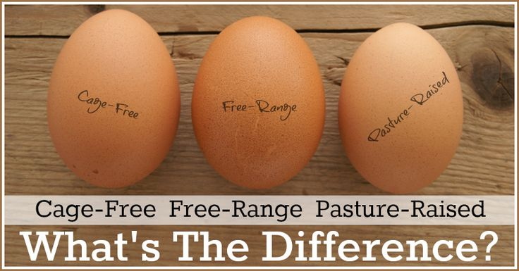 Cage-Free, Free Range & Pasture Raised: What's the difference?