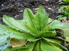 El analgésico natural que funciona como la morfina y se puede encontrar en su patio trasero - ConsejosdeSalud.info