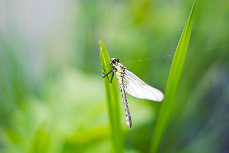 🌈 New free photo at Avopix.com - Nature insect dragonfly closeup    🆓 https://avopix.com/photo/48474-nature-insect-dragonfly-closeup    #insect #leafhopper #arthropod #grasshopper #invertebrate #avopix #free #photos #public #domain
