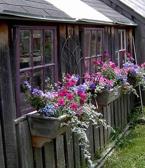 Windowboxes on a weathered shed