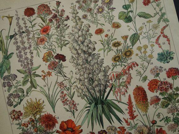 Antique French flora print about flowers  1902 by DecorativePrints