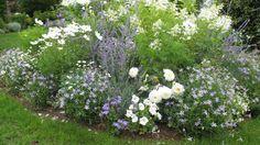 Comment utiliser le bicarbonate de soude au jardin ?