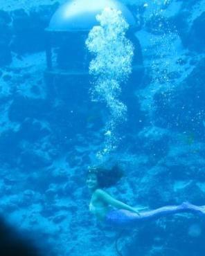 Mermaids galore in Florida