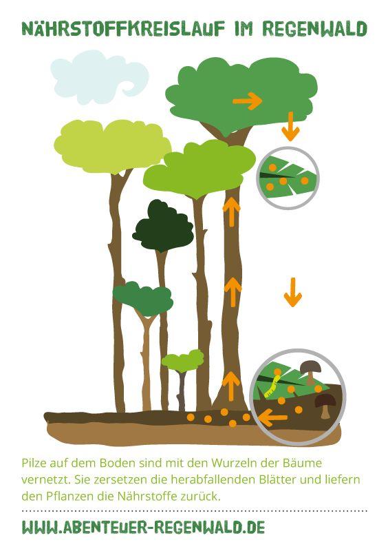 Nährstoffkreislauf im Regenwald  © Abenteuer Regenwald