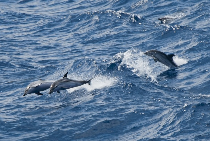 images of dolphins playing - photo #27