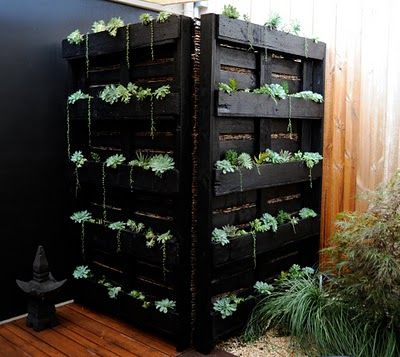 Another vertical garden made from pallets.