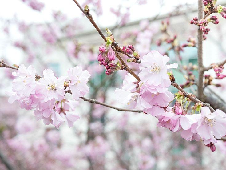 Les premiers jours de printemps en photo